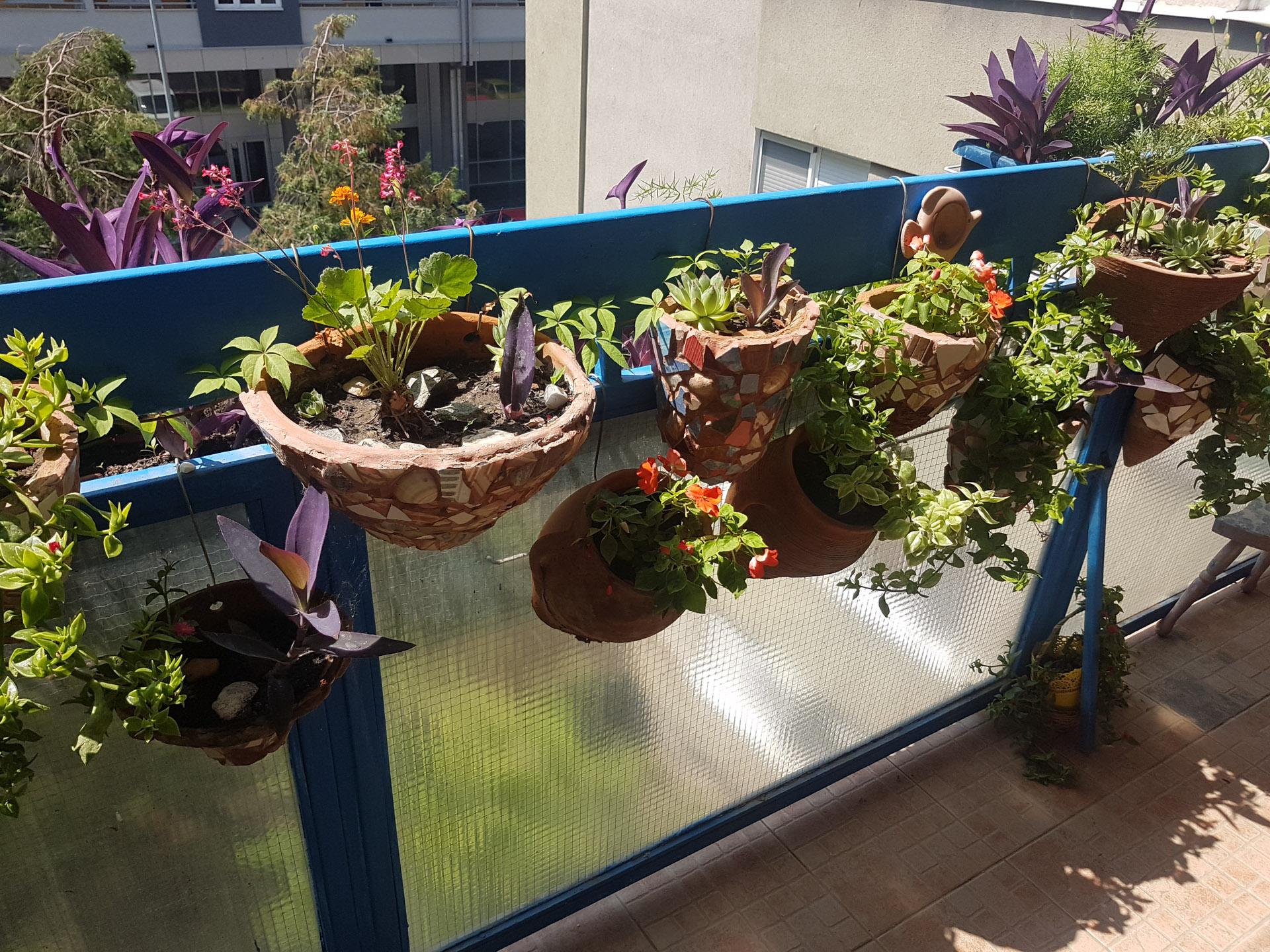Najlepša bašta balkon 2019, Pančevo