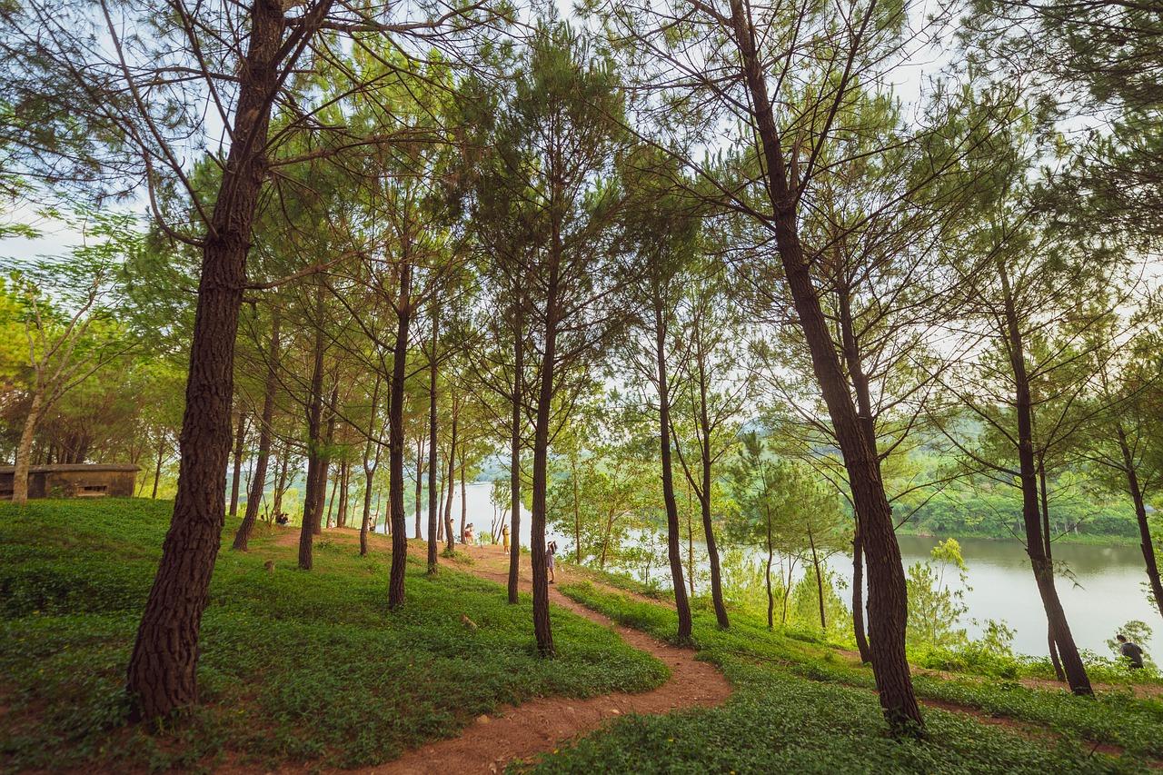 Drvo u šumi