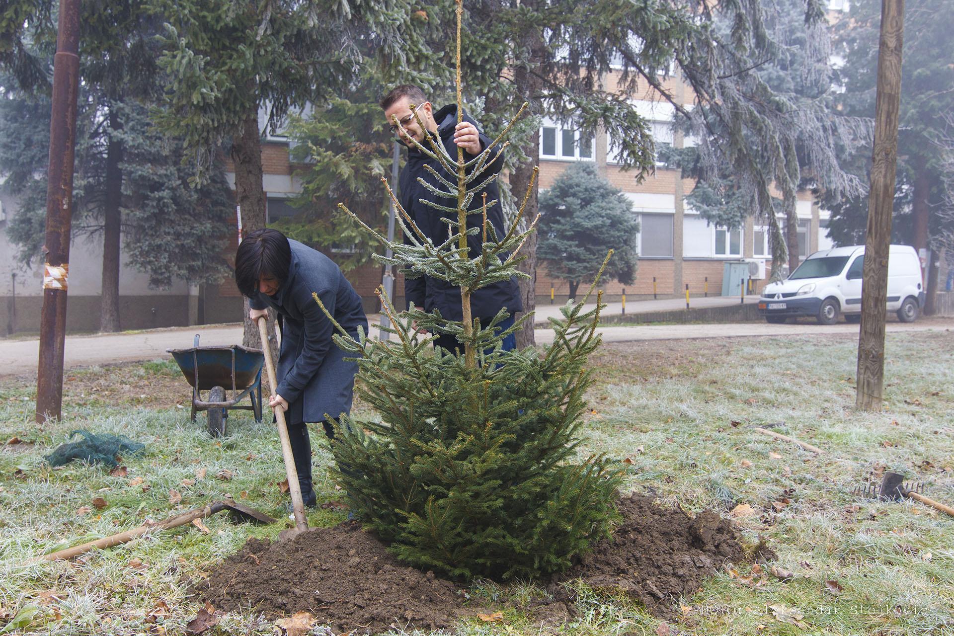 Drvo za prvu bebu Pančevo