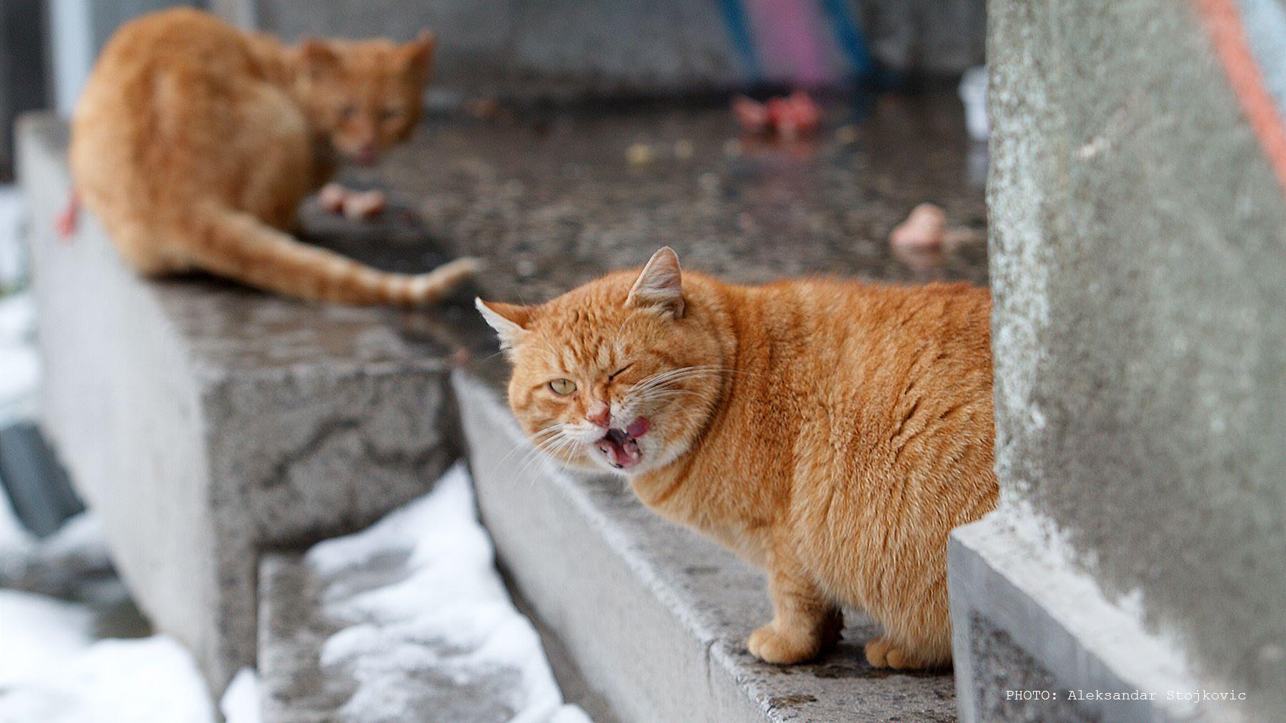 Mačak koji namiguje