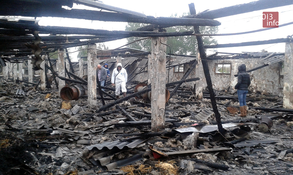 izgorela farma pilića