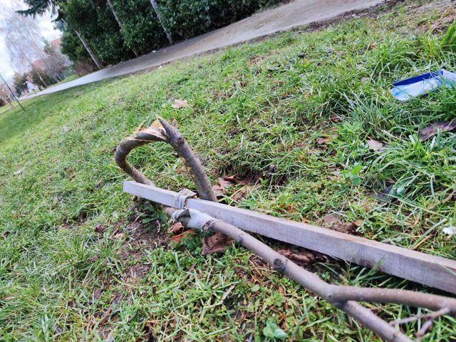 polomljena stabla