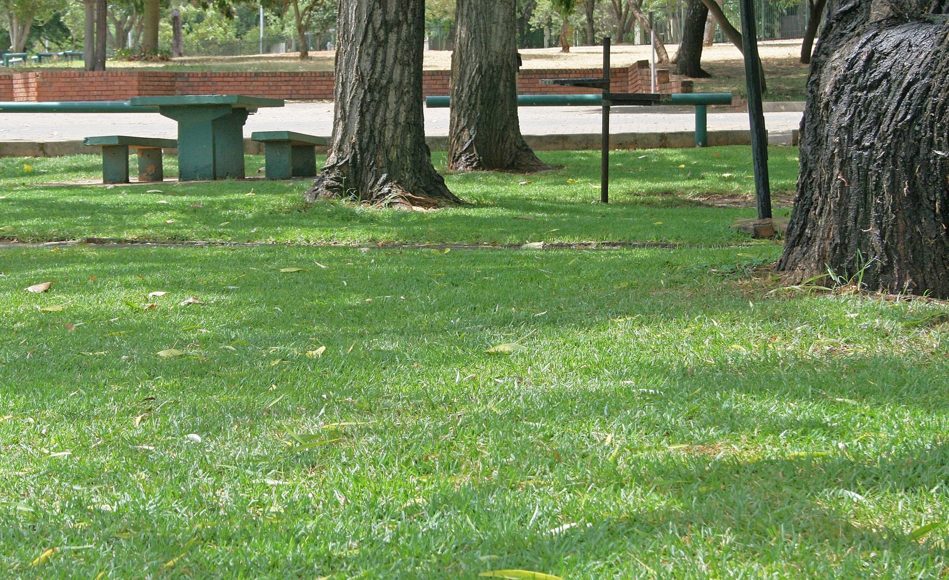 Zeleno dvorište
