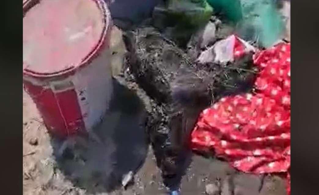 pas u katranu