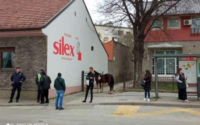 konj u gradu