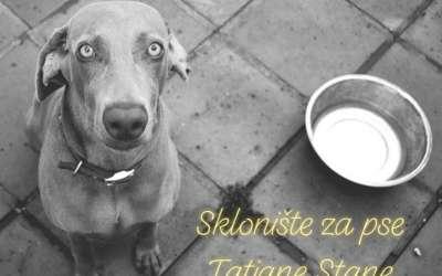 Apel za pomoć skloništu za pse