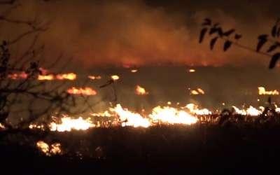 Požar na njivi između Crepaje i Pančeva