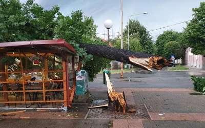 Drvo palo na kiosk