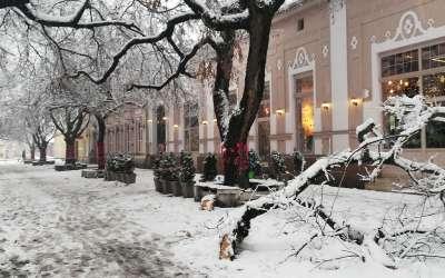 Grana pala na korzou, Pančevo, sneg