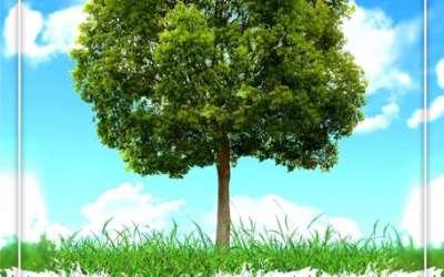 Zasadi drvo