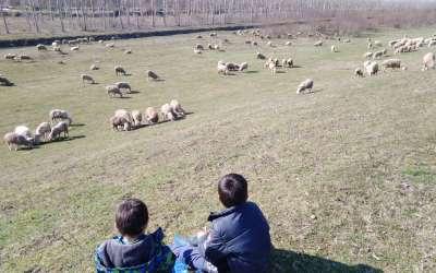 Mali čobani u Ivanovu