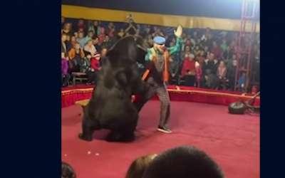 Medved napada dresera