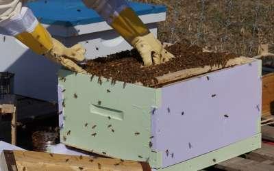 Pčelaar
