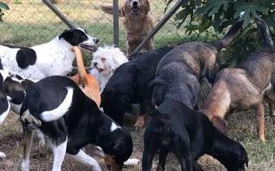 Tanjino sklonište za pse