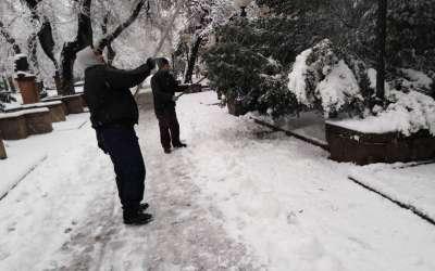 Radnici Zelenila tresu sneg sa grana u pančevačkom parku