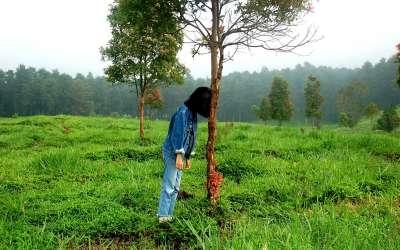 Zena polje drvo